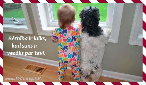 puisēns un suns skatās pa logu
