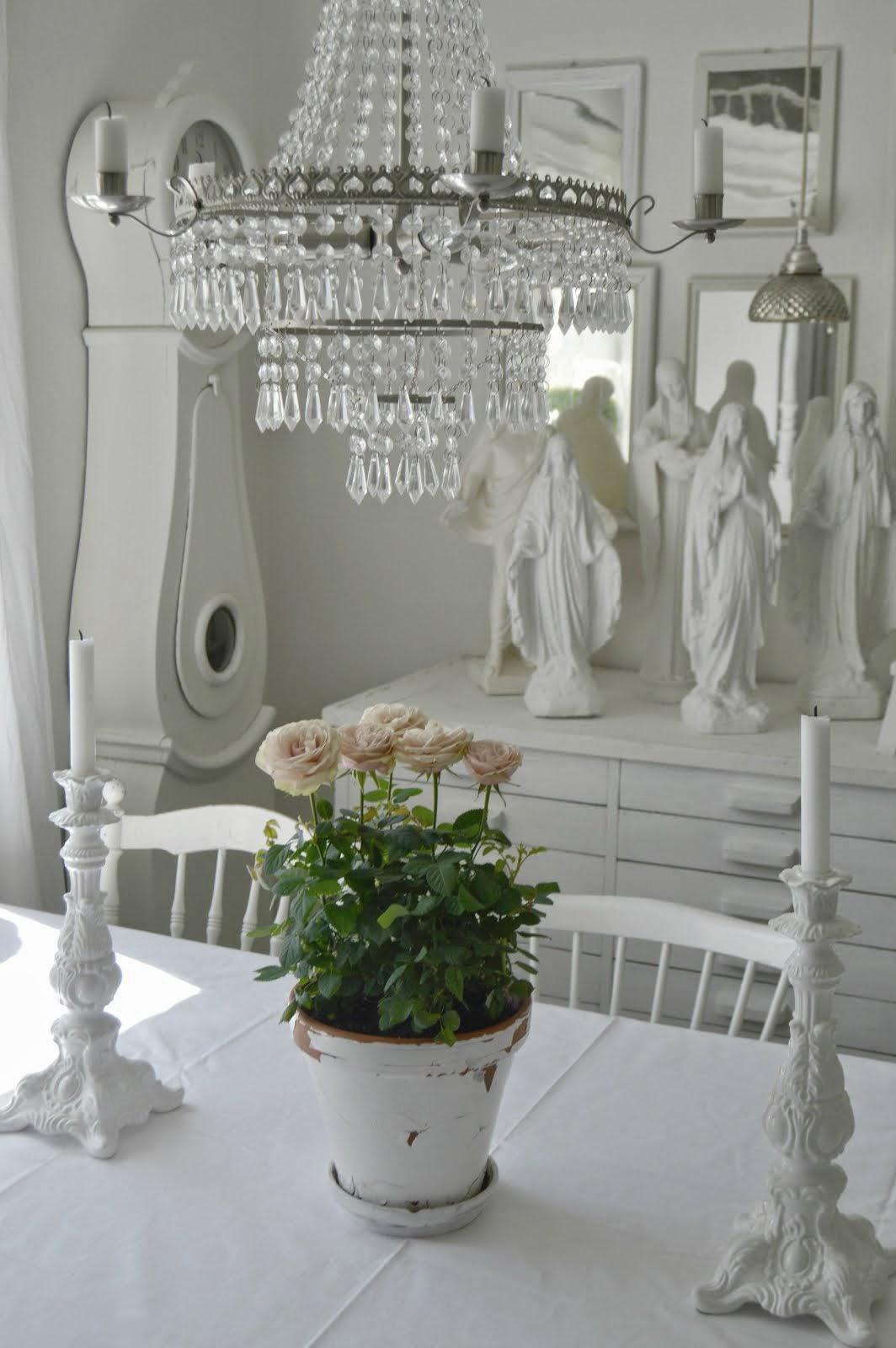 Rosa rosor i vårat vita matrum
