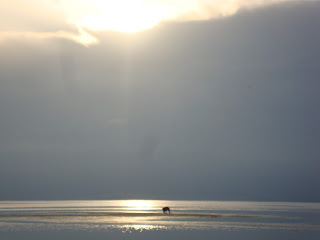 fisherman and Sunbeams in the Delta de L'Ebre