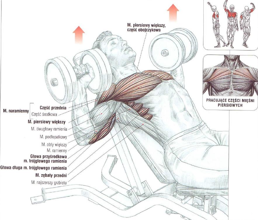 trening+klatki+piersiowej+wyciskanie+han
