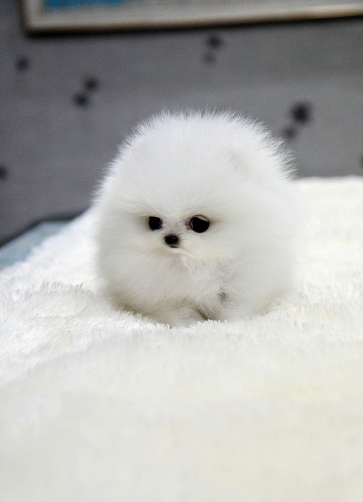 See more http://cutepuppyanddog.blogspot.com/