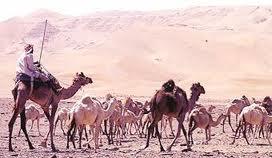 تاريخ وحضارة الجزيرة العربية قبل الاسلام