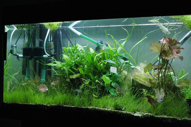Water Flow in Freshwater Aquarium Plants