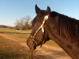 A photo of a horse's head from the side. The brown horse looks longingly off into the distance. There is a dirt path, a fence, and some leafless tress in the background.