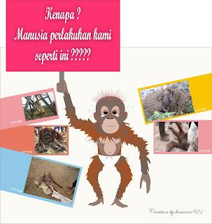 Baby of orangutan
