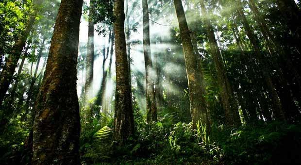 10 Negara dengan Hutan Terluas
