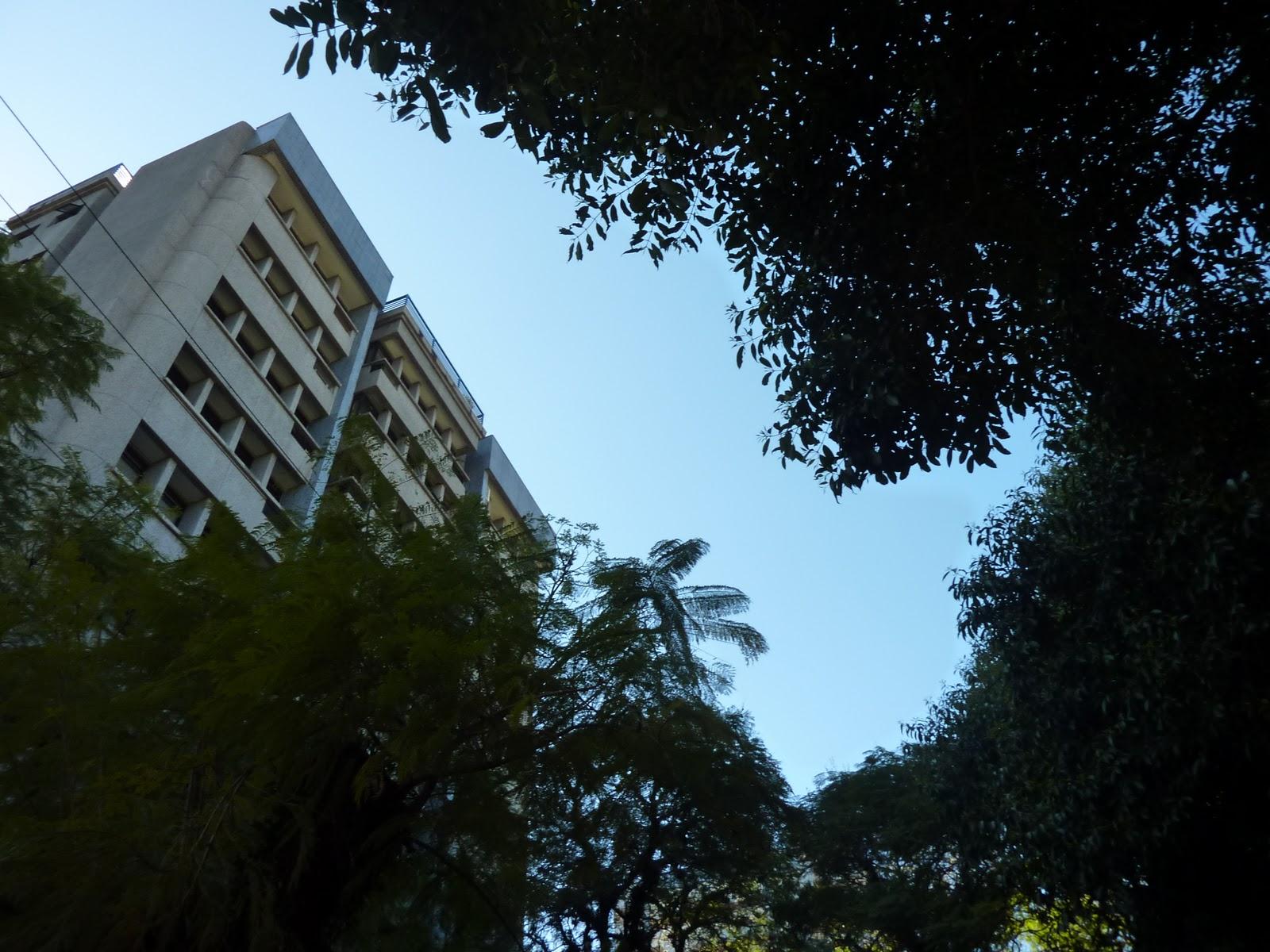 Global paths: Arcos árboreos de Porto Alegre