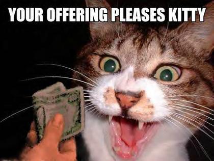 Money Funny Cat Funny.cats And.money Pics