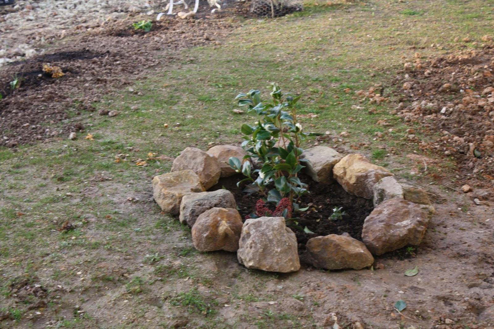 Le jardin traversiere les floraisons d 39 hiver for Jardin hiver plantation