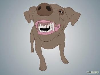 Hình 2: thứ tự răng trên chó