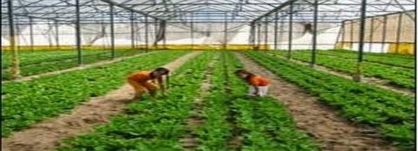تعريف الزراعة المحمية