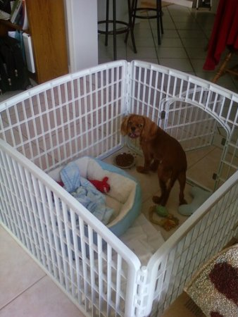 Dog Exercise Pen For Sale