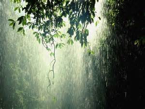 RAINFALL: THE FOREST