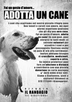 "Adotta un Cane - Associazione ""Il Randagio"""