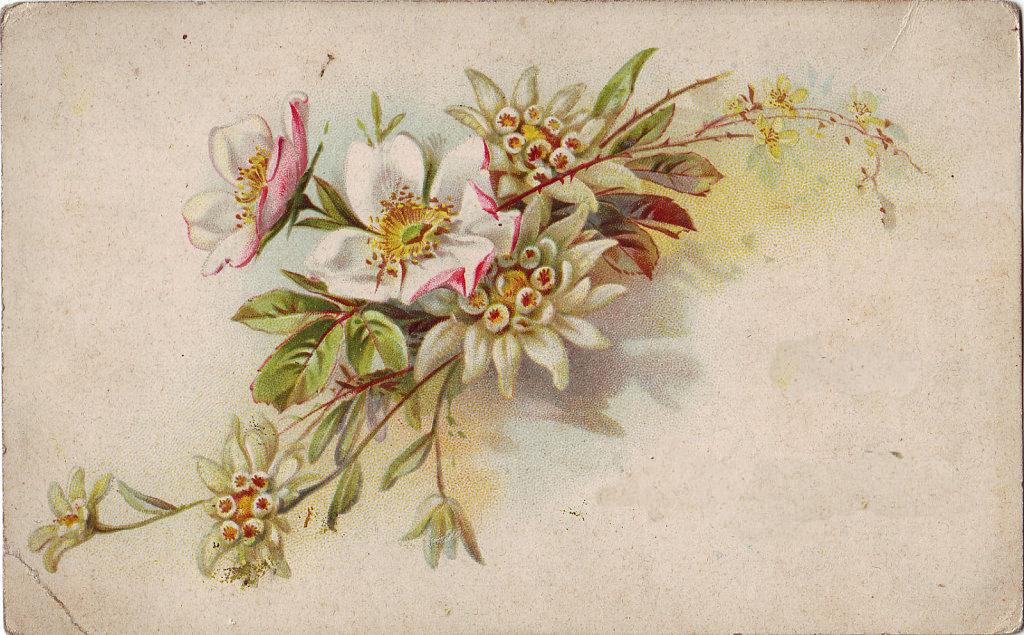 http://2.bp.blogspot.com/-X1CY-9lQfsw/UmOrbiLwixI/AAAAAAAABik/vRnpdqPOPjw/w1024-h635-no/flowerswhite.png