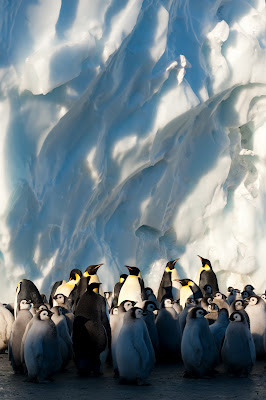 Penguins from Frozen Planet