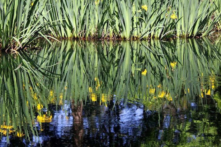 Iris Reflections
