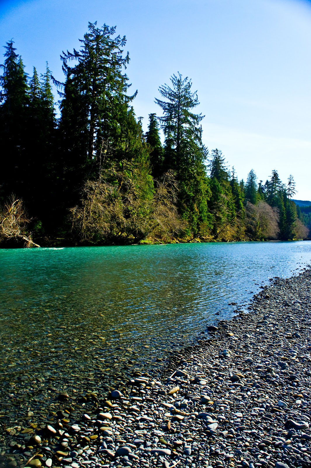 Troutbugs february 2012 for Hoh river fishing