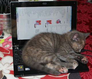 kitten laptop2