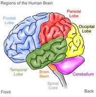 8 Cara Membuat Otak Kamu Berpikir Lebih Cepat