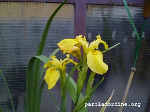 la stanza verde di cri iris