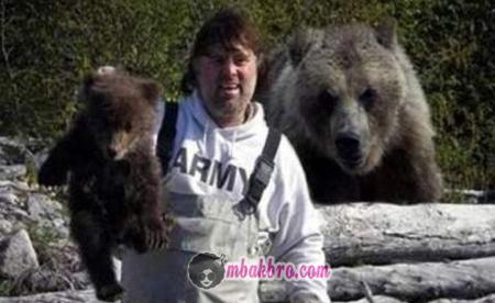 awas beruang!