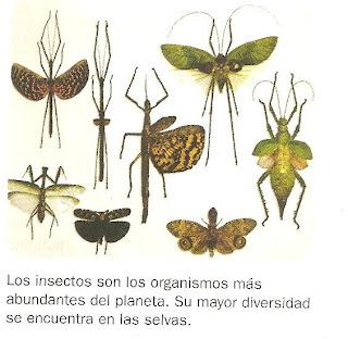 Los insectos son los organismos más abundantes del planeta. Su mayor diversidad se encuentra en las selvas