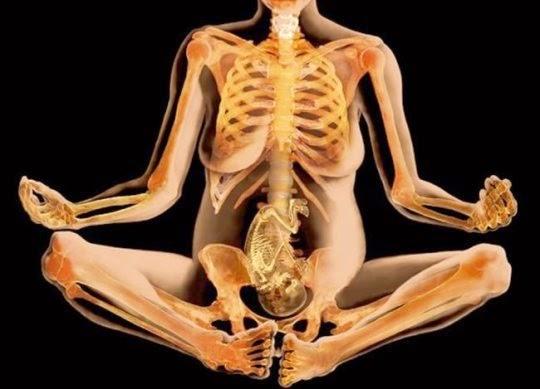 cuerpo humano imagenes partes