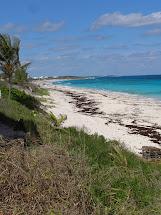 Bahama Bob' Rumstyles Guana Cay In Abaco'