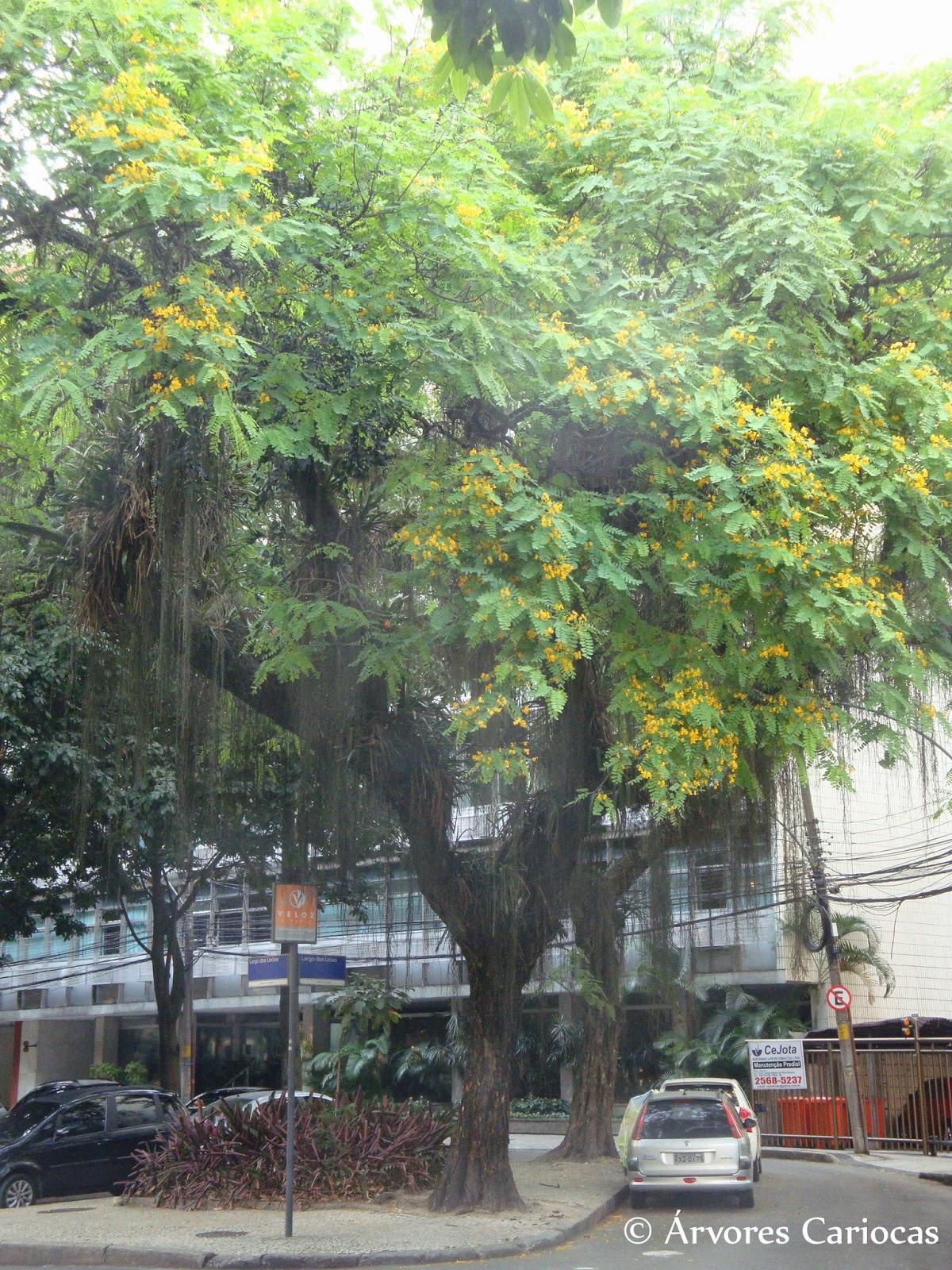 Planta Mundo Plantas e sementes raras do Brasil e do