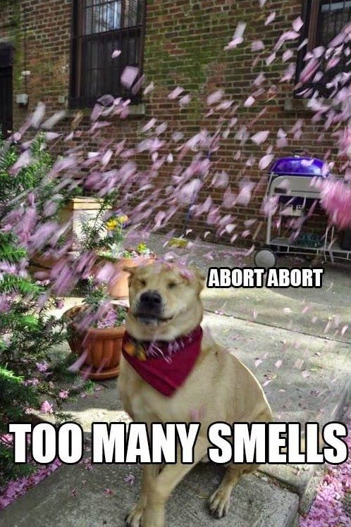Funny Dog Memes - Abort Too Many Smells