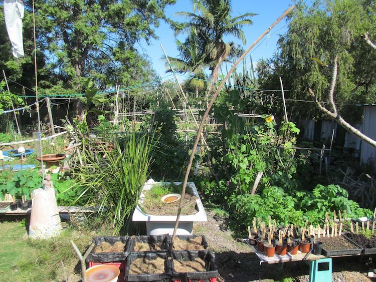 behind them a two mound bed buried under growth milk crate garden bottom centre - Milk Crate Garden