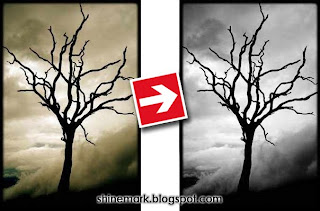 death%2Btree-black-and-white-photo-by-saimoom-shinemark
