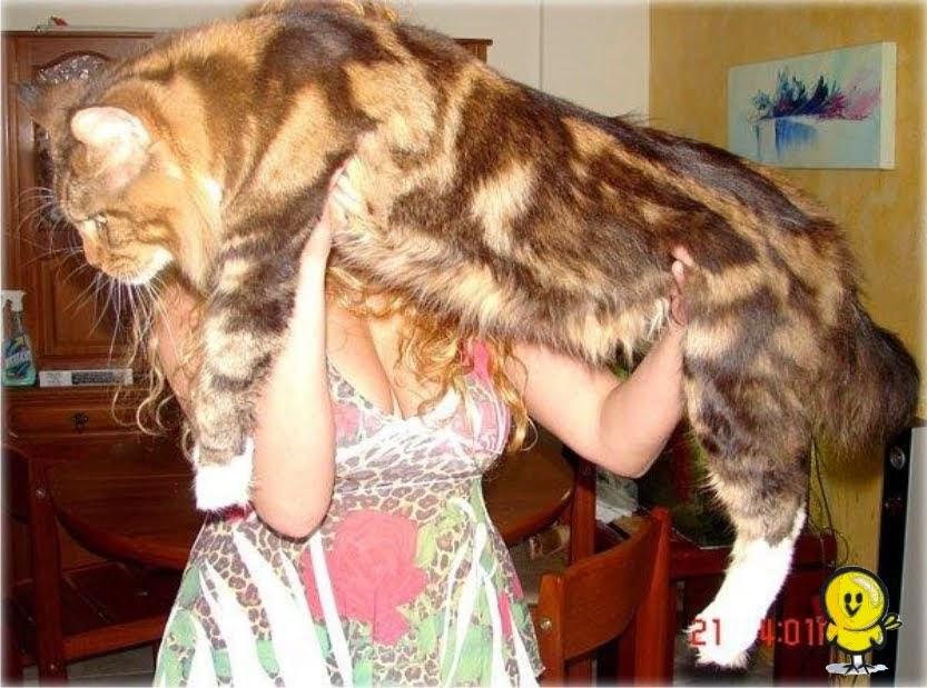 Maiores animais do Mundo