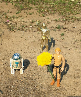 Luke Skywalker, R2D2 and C3PO at Stein Your Florist Co.