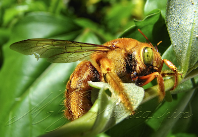 Macro Photography Tips for Point and Shoot Digital Cameras