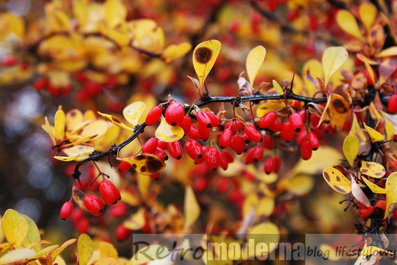 jesienna przyroda