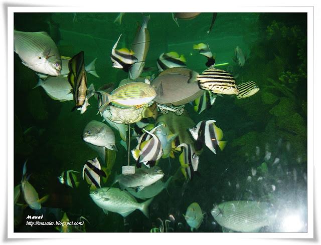 澎湖水族館4