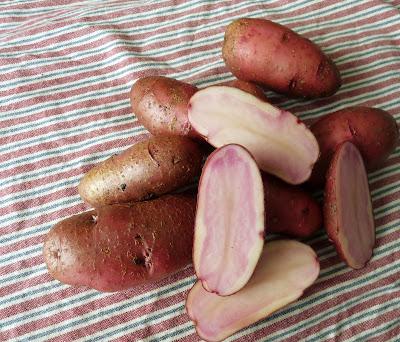 Red Thumb Potatoes