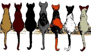 Las 7 vidas de un gato
