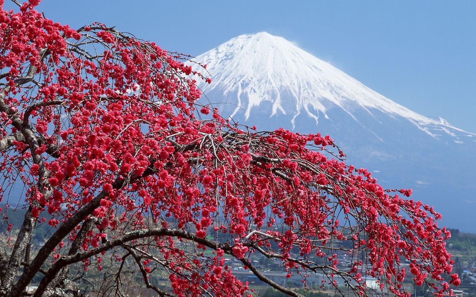 http://2.bp.blogspot.com/-X4NwhC5oCek/T47EmBHcY7I/AAAAAAAADUE/3pJjzww51Sk/s1600/japan-mountain-backdrop-windows-8-wallpaper-2560x1600.jpg