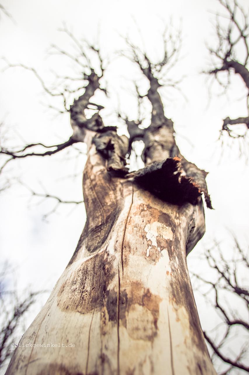 Verbrannter Baum
