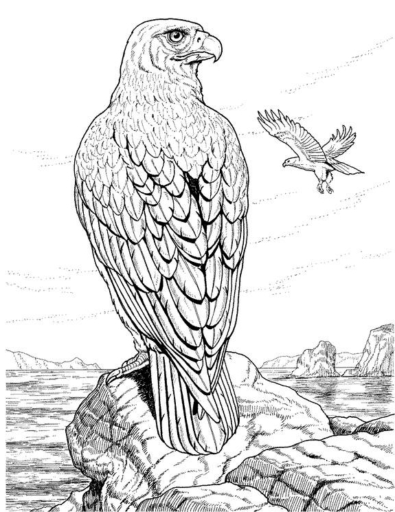 Posted in Animal Animal Drawings Animal Print Bird Drawings Black