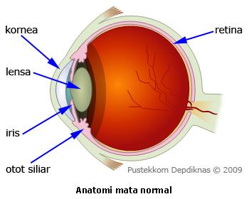 Bagian Bagian Mata