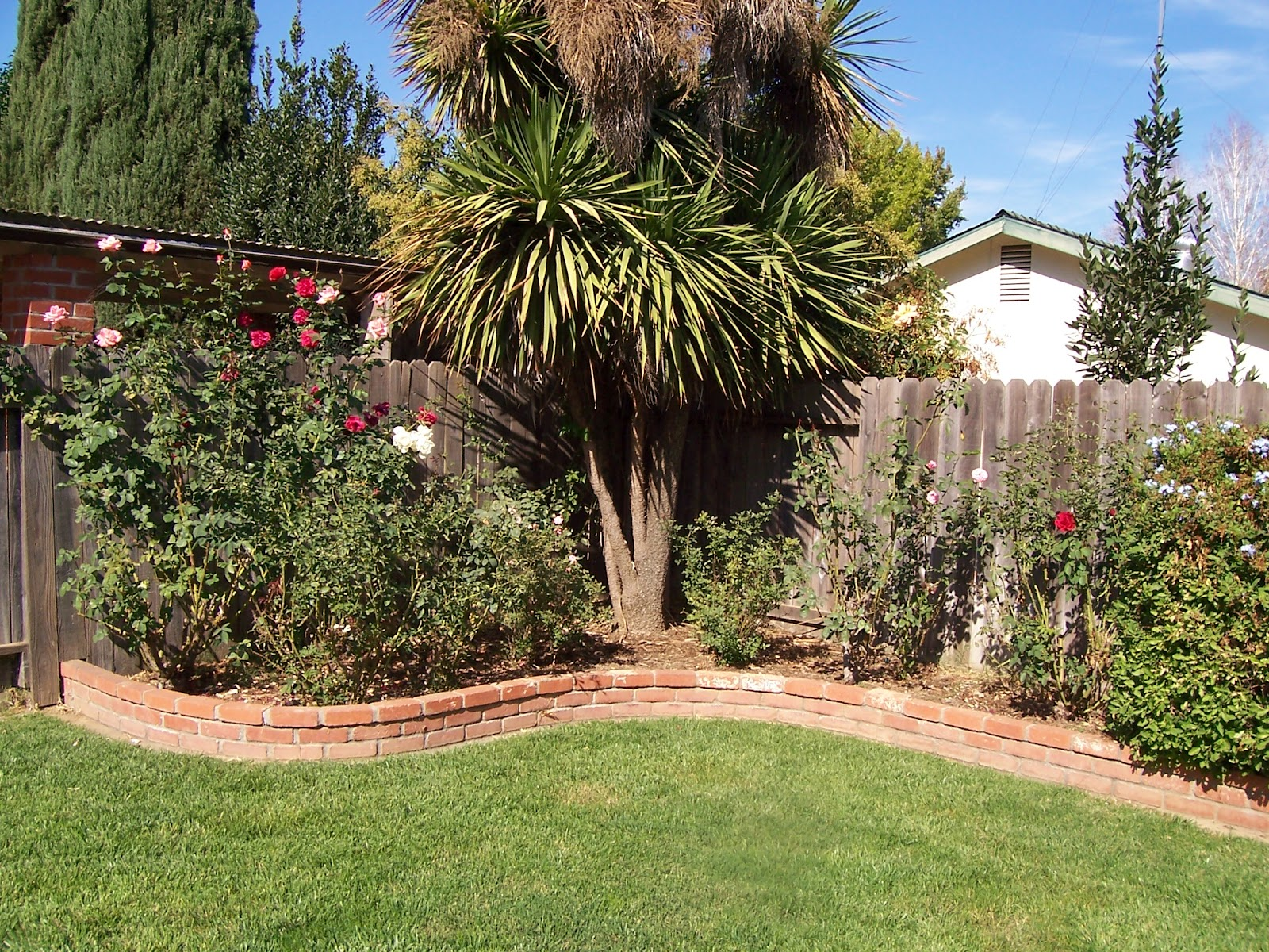 me so thorny i am my garden u0027s biggest pest apparently