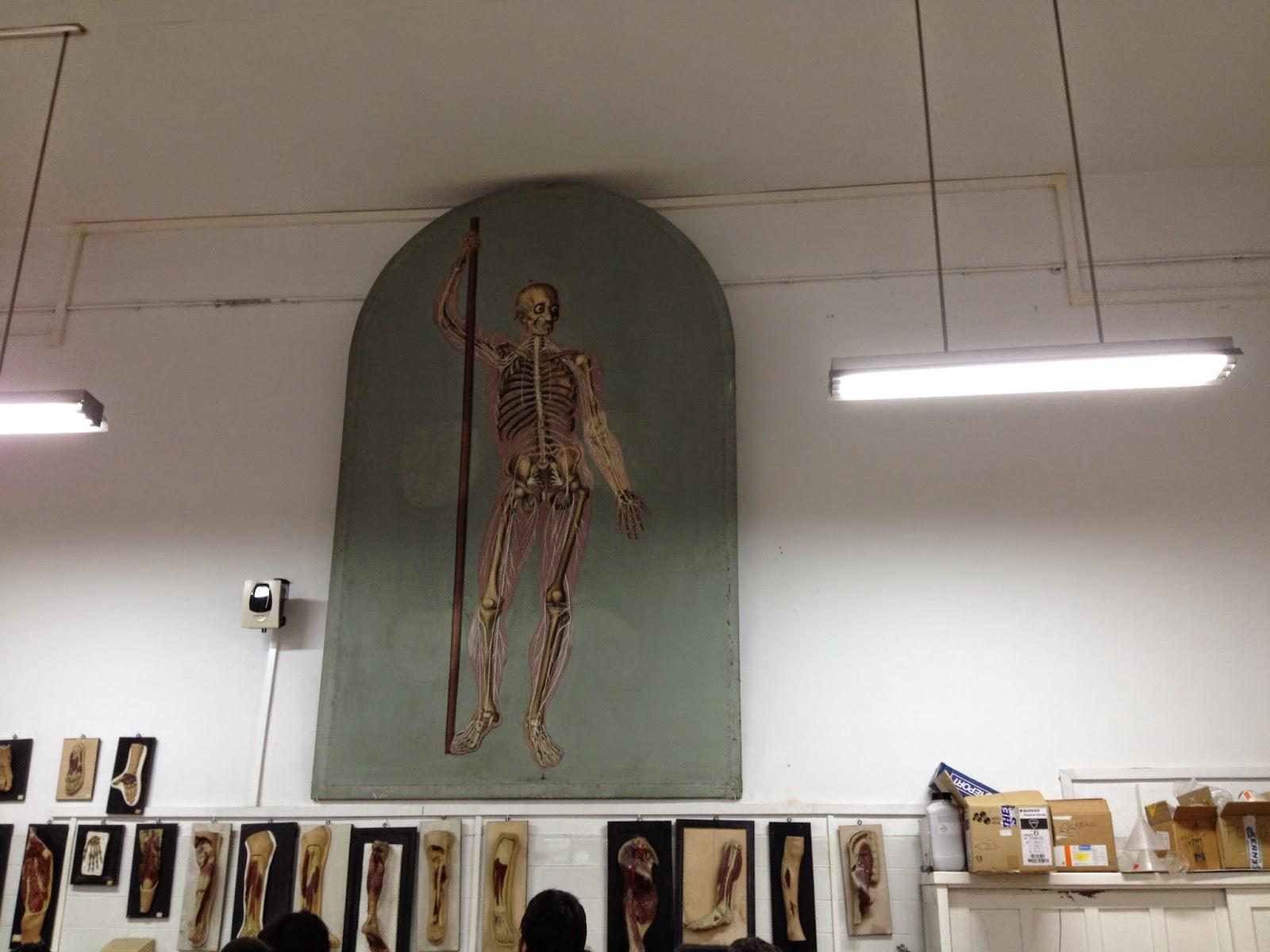mi lado derecho del cerebro: MUSEO DE ANATOMÍA DE VALLADOLID