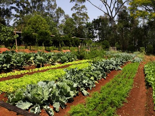 atividades alfabetizacao jardim horta pomar:insustentável leveza da Natureza: Hortoterapia