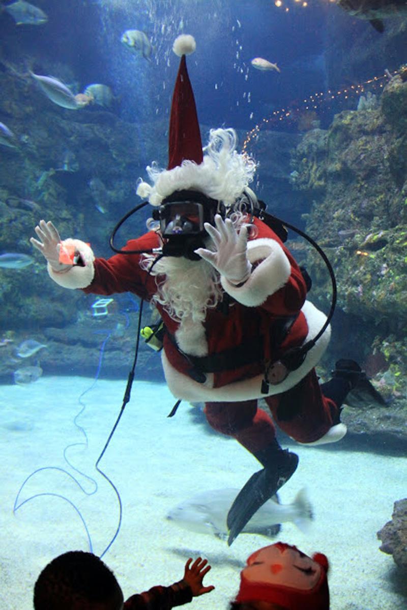 pleasure island nc santa visits the nc aquarium at fort fisher