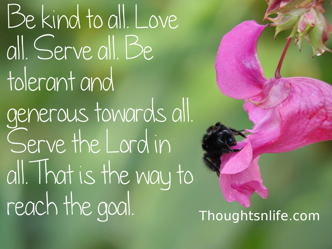 Be kind to all. Love all. Serve all. Be tolerant and generous towards all. Serve the Lord in all. That is the way to reach the goal.