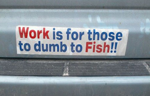 2 or too dumb to have a bumper sticker designed online